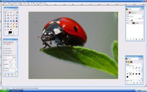 GIMP 2.10.18 update 2 - ITA