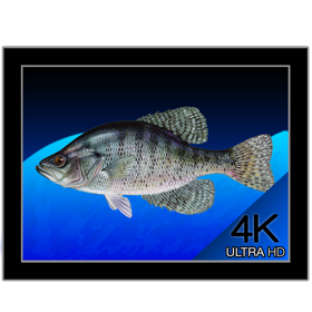 [MAC] Aquarium 4K - Live Wallpaper v1.0.3 - Eng